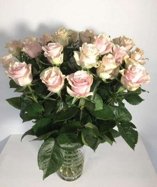 Heleroosa roos 70cm